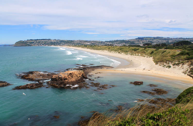 The view of St Clair / St Kilda Beach from Lawyers Head, Dunedin, New Zealand