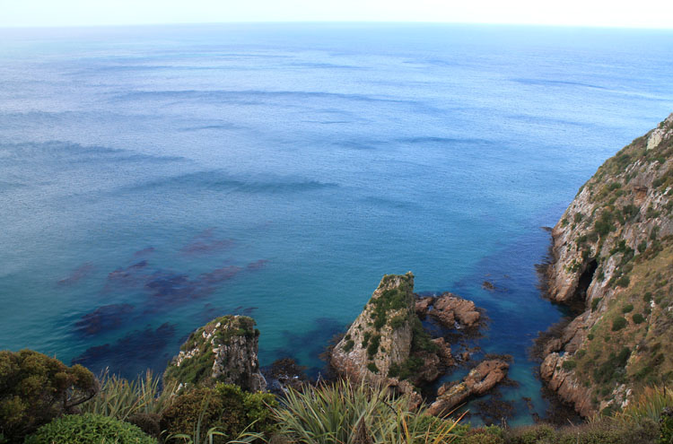 On the path to Nugget Point, the Catlins, New Zealand