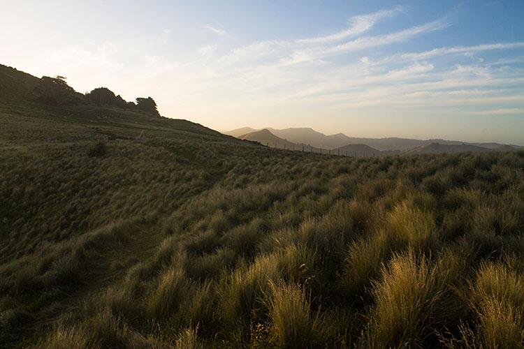 Hiking the Sandymount Track, Otago Peninsula, Dunedin, New Zealand