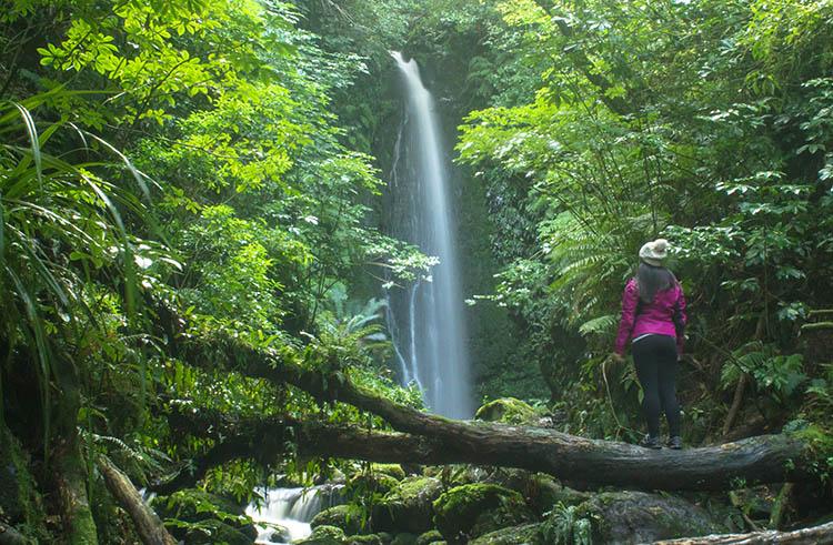 The powerful Nicols Falls, Dunedin, New Zealand