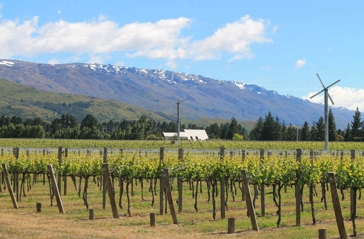 Cromwell travel guide, New Zealand: a Central Otago vineyard