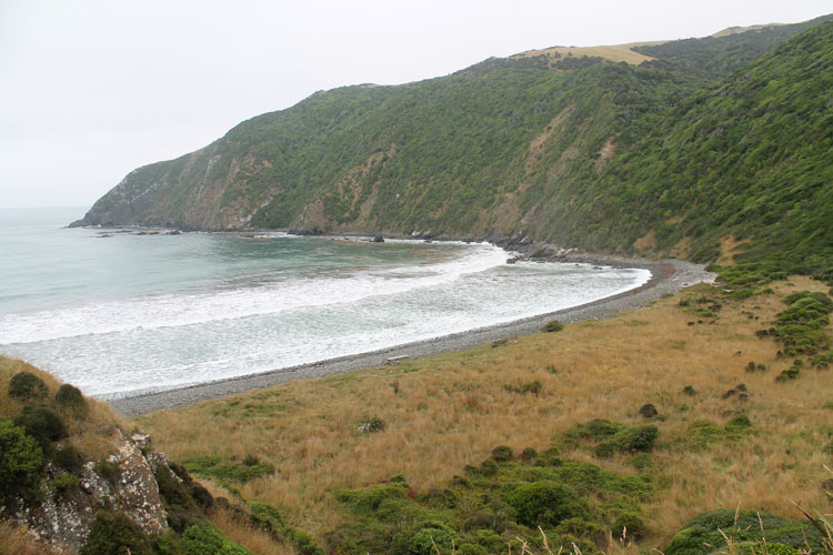 Roaring Bay, near Nugget Point, New Zealand