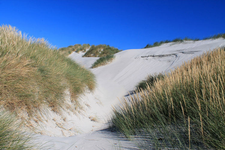 Sand dunes at Smails Beach, Dunedin, New Zealand