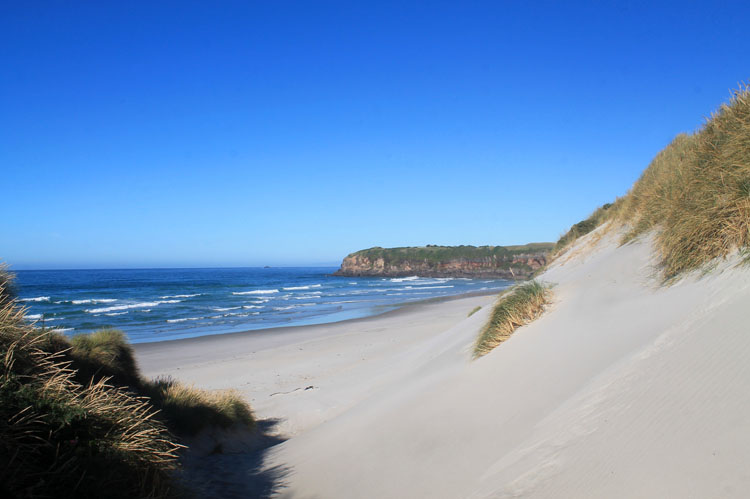 Sand dunes at Tomahawk Beach, Dunedin, New Zealand