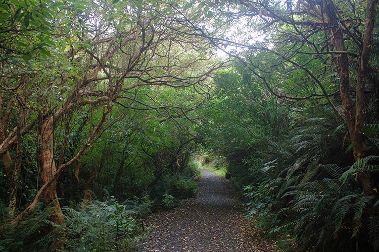The Nicols Falls Track, Dunedin, New Zealand