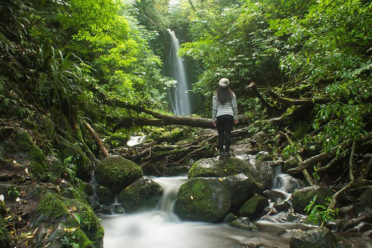 Hiking to Nicols Falls, Dunedin, New Zealand