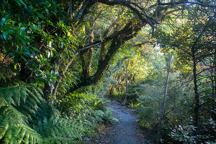Hiking through the bush to Mount Cargill, Dunedin, New Zealand