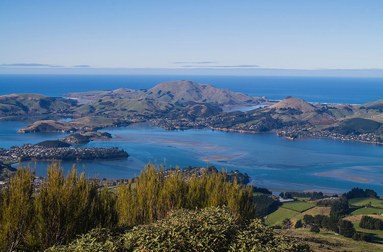 Hiking to the top of Mount Cargill, Dunedin, New Zealand