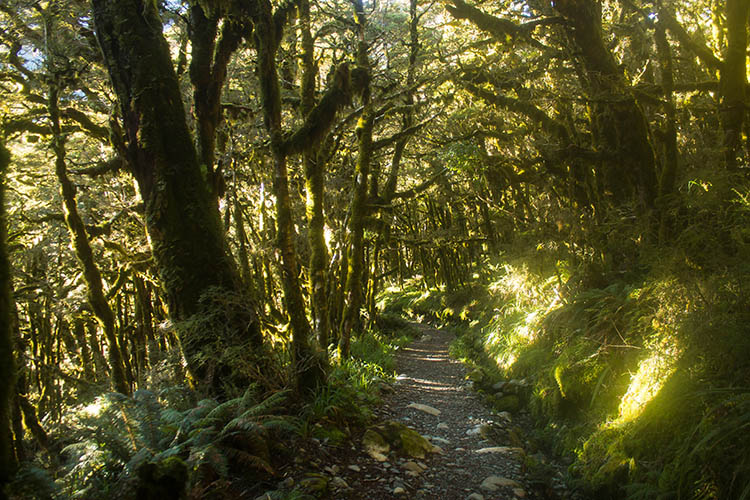 The track to Earland Falls, Fiordland National Park, New Zealand