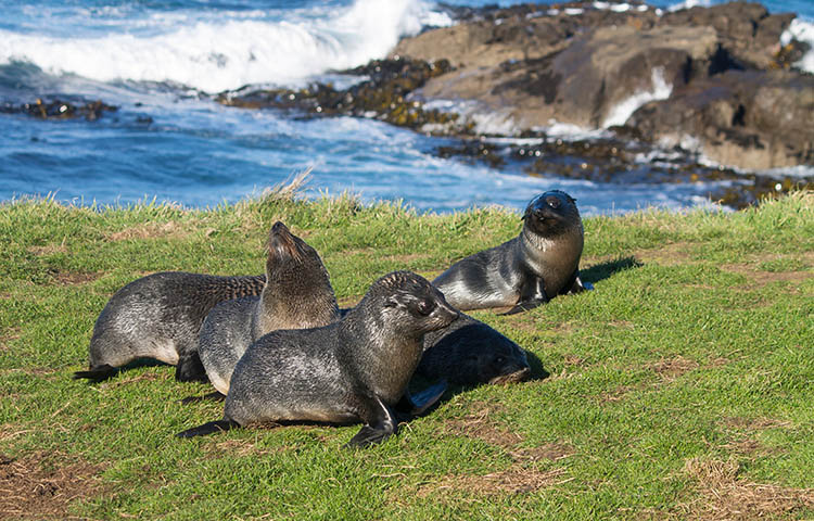 The best things to do in Moeraki, New Zealand -- Spotting Fur Seal Pups