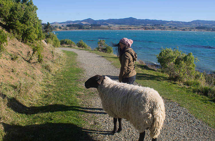 The best things to do in Moeraki, New Zealand -- playing with sheep