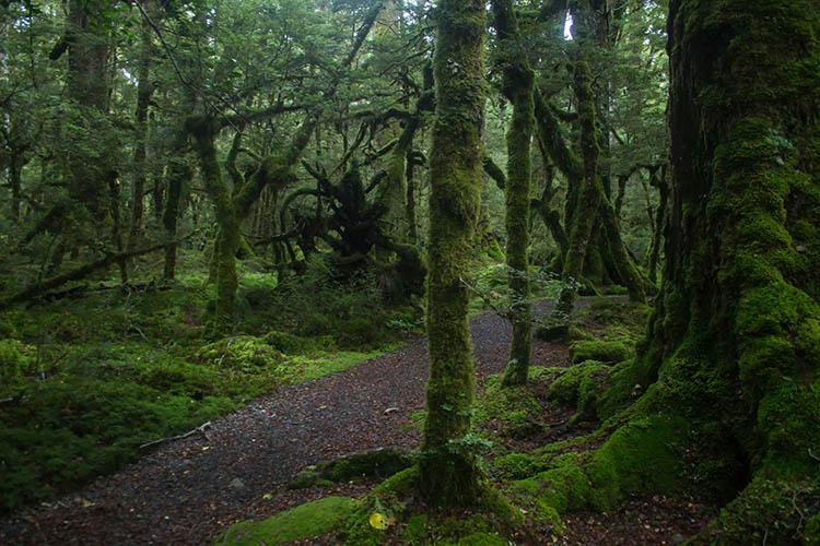 Lake Gunn Nature Reserve, Fiordland National Park, New Zealand