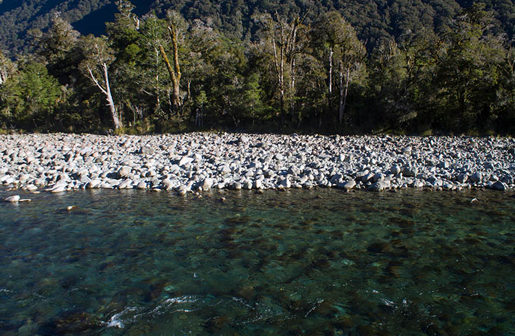 A scenic river near Humboldt Falls, Fiordland, New Zealand
