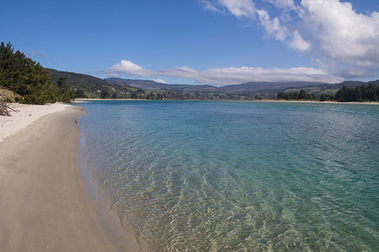 The tropical side of Warrington Beach, Dunedin, New Zealand