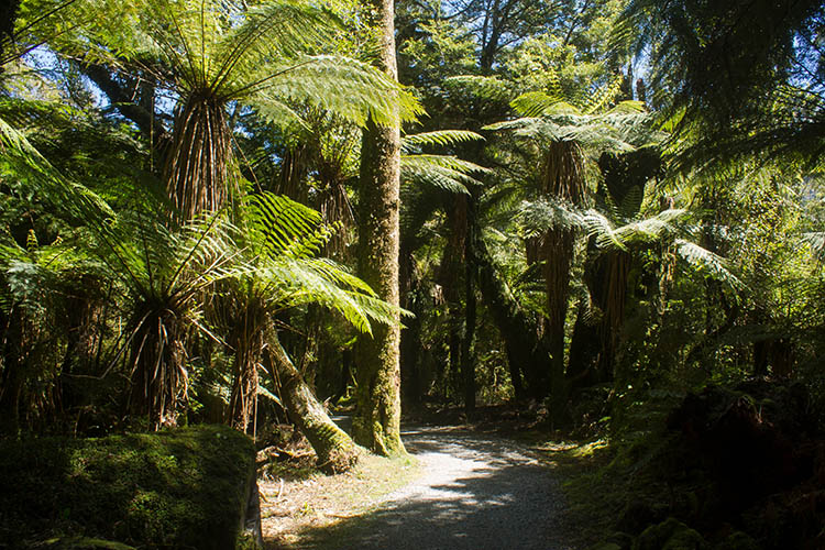 Forest walk to Roaring Billy Falls, Mount Aspiring National Park, New Zealand