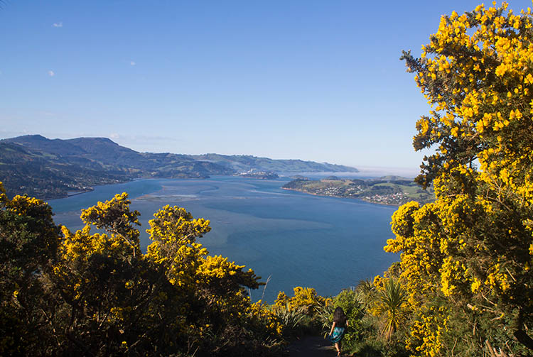 The Soldiers Memorial Track, Otago Peninsula, Dunedin, New Zealand