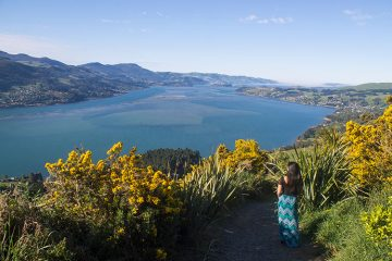 Walking the Soldiers Memorial Track, Dunedin, New Zealand