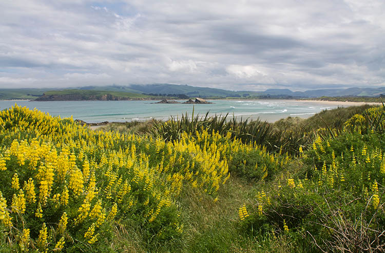 Walking from Cannibal Bay to Surat Bay, the Catlins