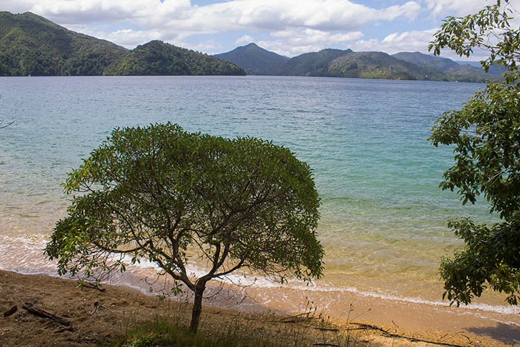 Beach at Governors Bay, Marlborough Sounds, New Zealand