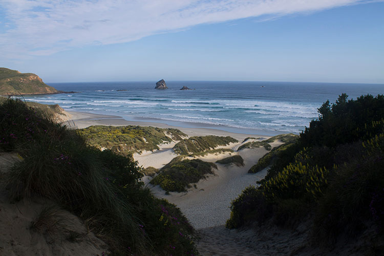 Walking down the dunes to Sandfly Bay, Dunedin