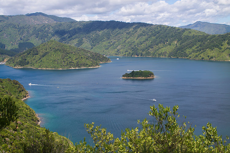 Things to do in Picton, New Zealand -- the Snout Track