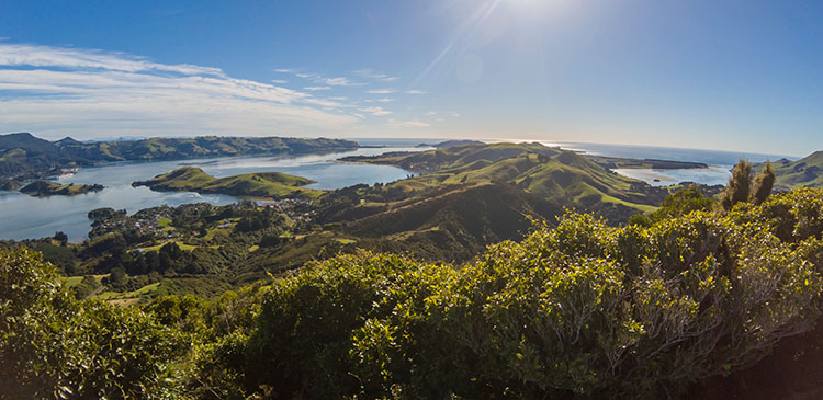 Hiking the Harbour Cone Track, Dunedin, New Zealand