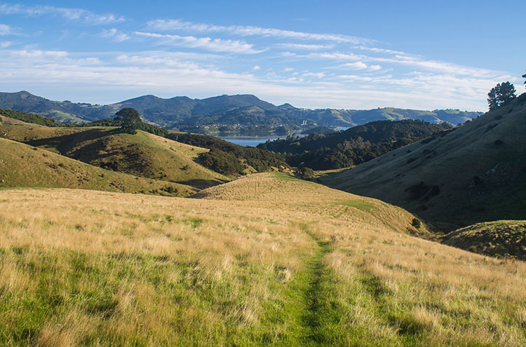 Hiking to the Harbour Cone from Bacon Street, Dunedin, New Zealand