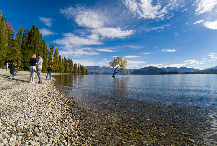 A crowd at That Wanaka Tree, New Zealand