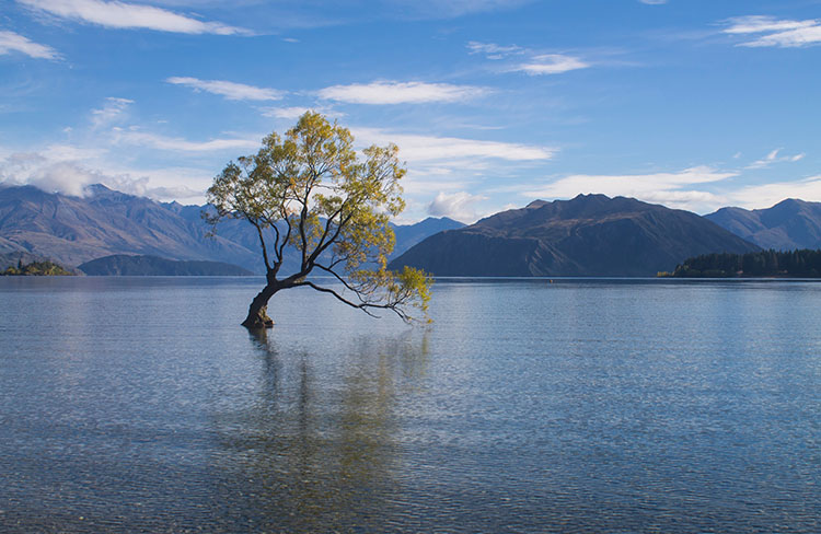 That Wanaka Tree in Autumn, New Zealand