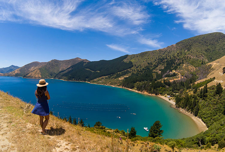 Beautiful views on the road to Bulwer, near French Pass, Marlborough Sounds, New Zealand