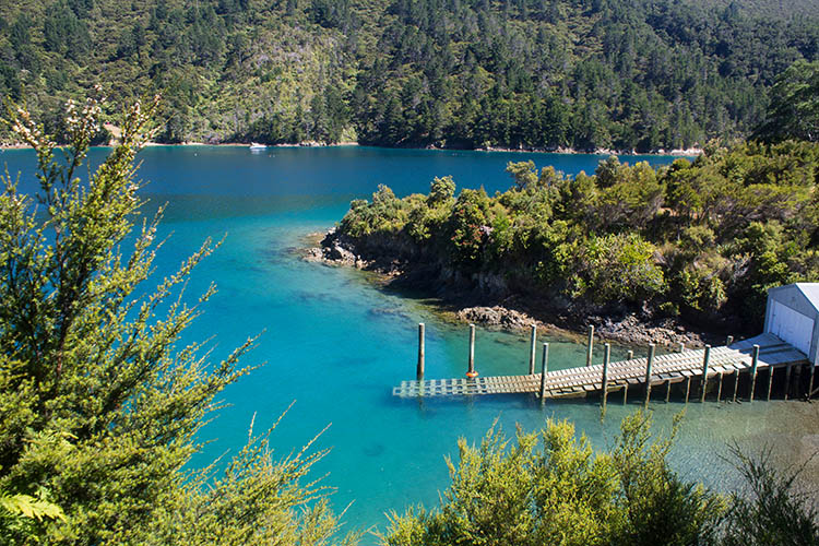 Elaine Bay, a good stop while driving the French Pass Road, Marlborough Sounds, New Zealand