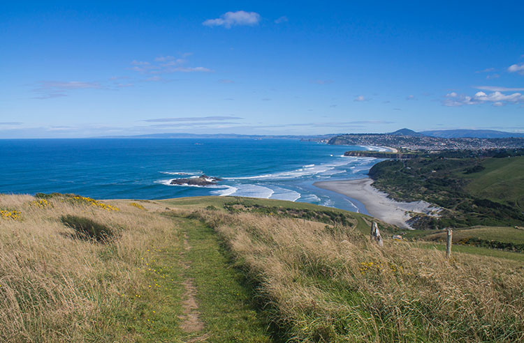 Stunning view of Dunedin from the Karetai Road Track, New Zealand
