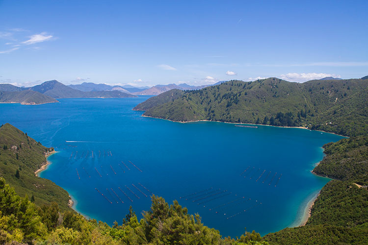 Driving to French Pass and Bulwer, Marlborough Sounds, New Zealand