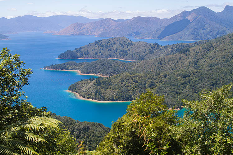 A viewpoint in the Marlborough Sounds, New Zealand