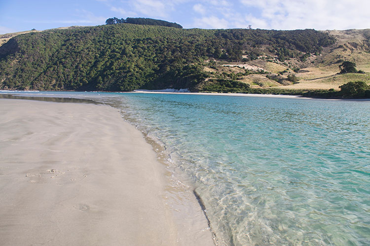 Clear blue water at Allans Beach, Dunedin, New Zealand