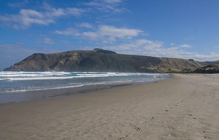 Allans Beach, Dunedin, New Zealand