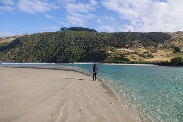 Allans Beach, a great beach on the Otago Peninsula, Dunedin, New Zealand