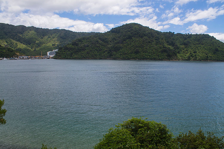 The track to Bob's Bay, Picton, New Zealand