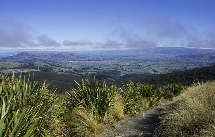 Pineapple Track, Dunedin, New Zealand