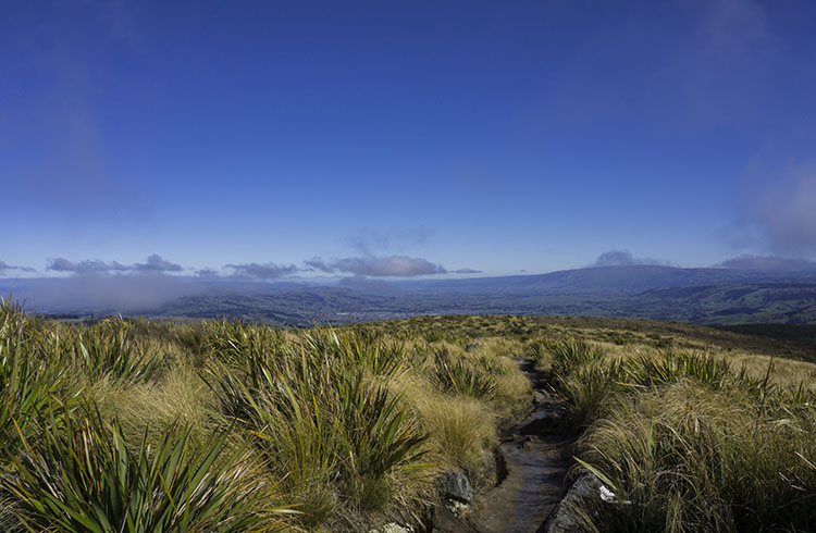 Hiking the Pineapple Track, Dunedin, New Zealand