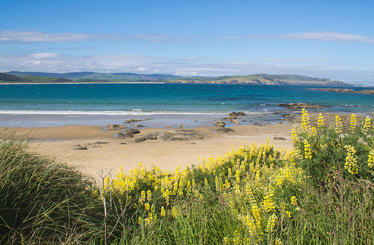 Curio Bay, the Catlins, New Zealand