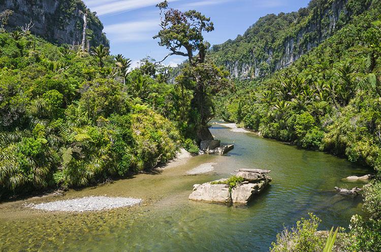 Things to do in Punakaiki, New Zealand -- the Pororari River Track