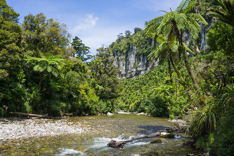 Pororari River, West Coast, New Zealand