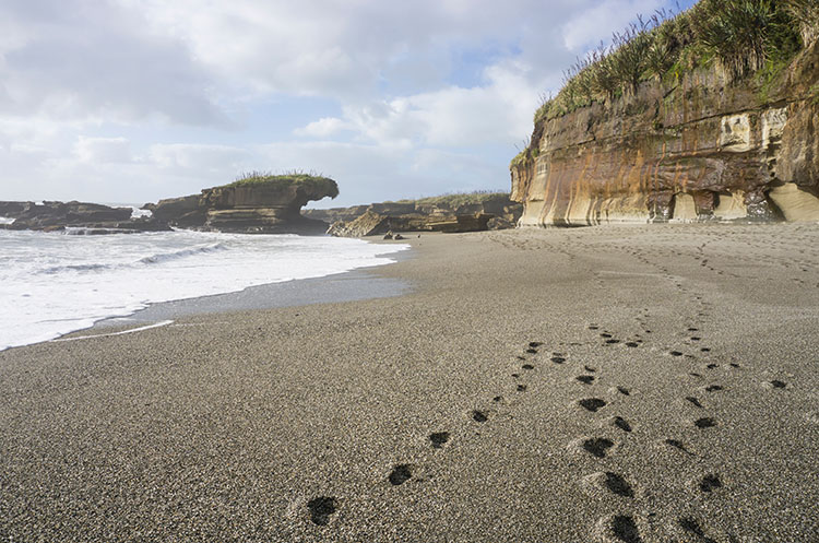 Truman Track -- one of the best things to do in Punakaiki, New Zealand