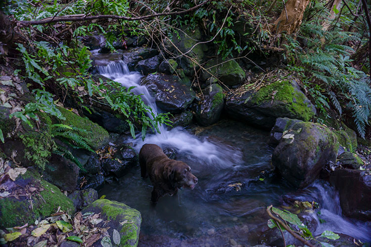 A small waterfall on the Fyffe-Palmer Track, Kaikoura, New Zealand