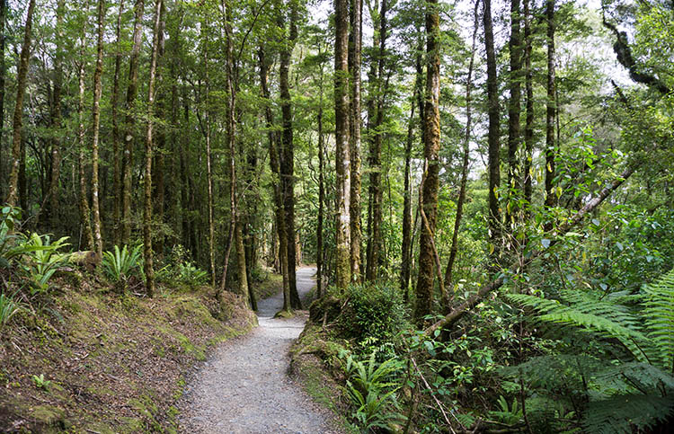 The forest track to Coal Creek Falls, West Coast, New Zealand