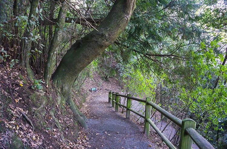 Botanical Hill, Nelson, New Zealand