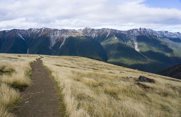 The track to Bushline Hut, Nelson Lakes National Park, New Zealand