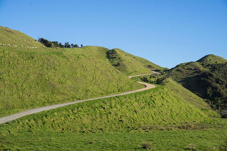 A road through farmland on the drive to Anatori, New Zealand