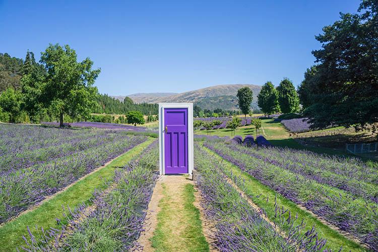 A purple door at Wanaka Lavender Farm, New Zealand